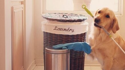 Best Pet Hair Cleaning Tips