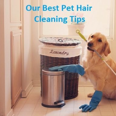 Pet Hair Cleaning Tips